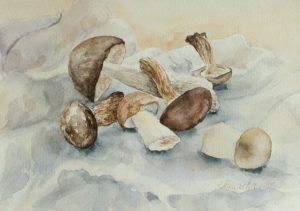 Грибы акварелью